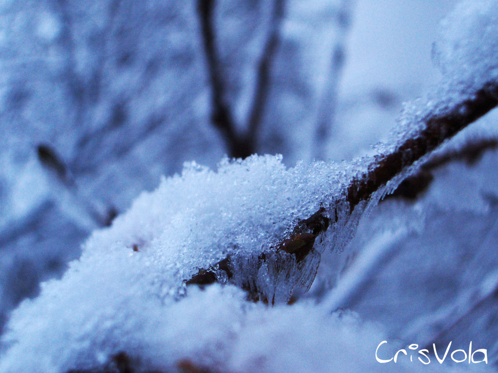 moments - snow moments photo music flowersphoto and music maker cristian nevola crisvola